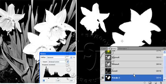 Белым цветом в Альфа канале обозначаются выделенные участки, черным – участки вне выделения