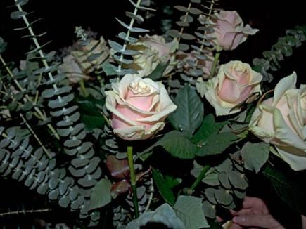 фото с розами